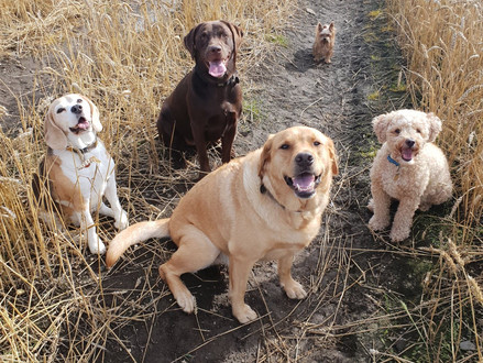 WHY DAY CARE CENTRES OR GROUP DOG WALKS AREN'T ALWAYS THE BEST CHOICE FOR YOUR DOG…