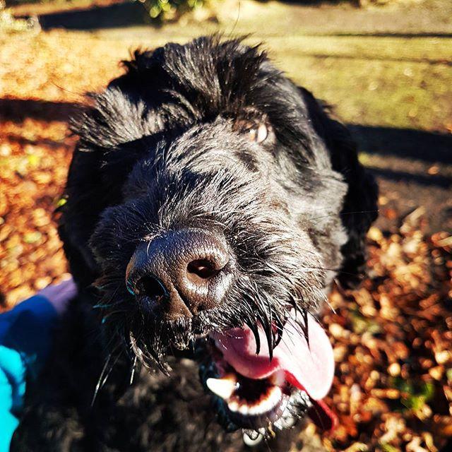 Cuddles with Wallace 😍😍_#dogwalkersofinstagram #dogsofinstagram #edinburghdogs #corstorphinehill #