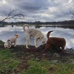 Today's Curly Crusaders...🐩🐾💕