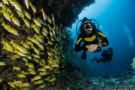 Pourquoi certains compléments sont intéressants pour les plongeurs?