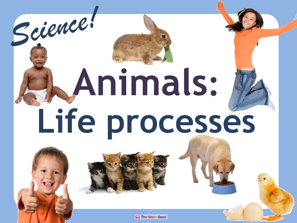 Life Processes - Our 5 senses