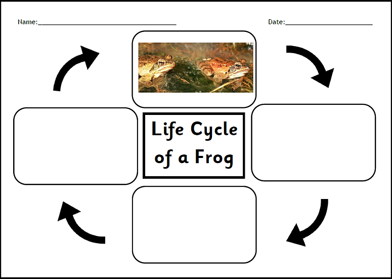 Frog life cycle worksheet cut and paste