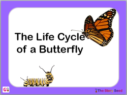 Butterfly Life Cycle Power Point