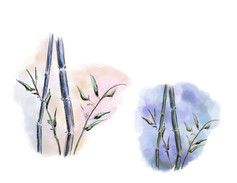 Bamboo Study