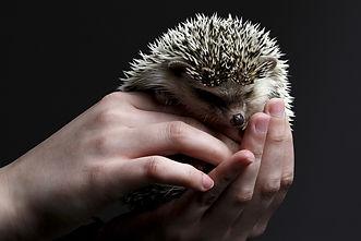 hedgehog-3209499_1280.jpg