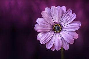nature-summer-purple-yellow-36753.jpg