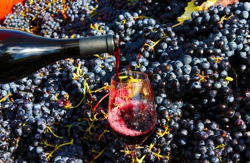 Goûtez les vins locaux