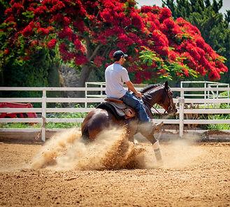 Reining Horse Training