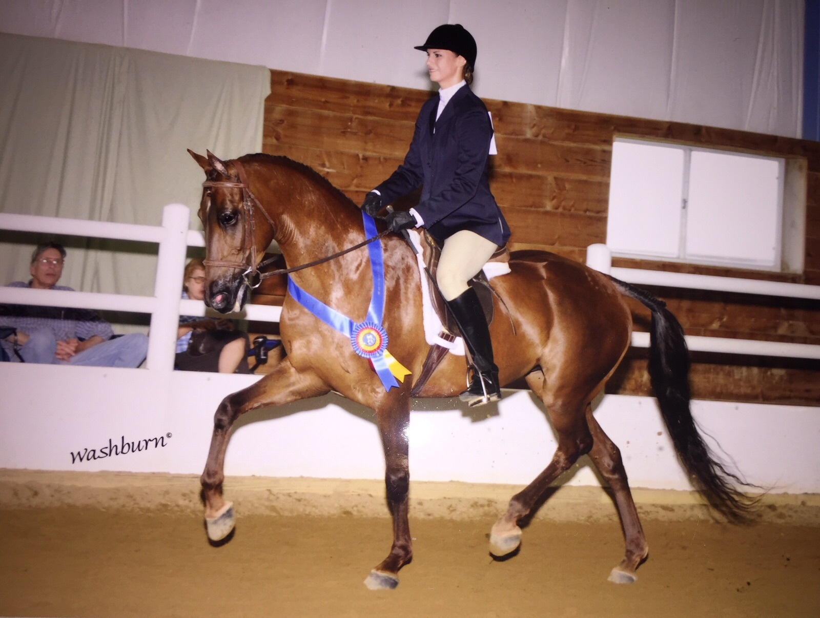 Kim - Champion Hunter Under Saddle
