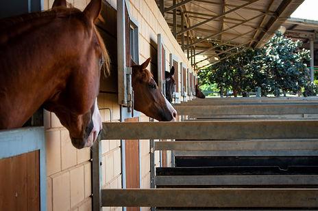 KPH Show Barn