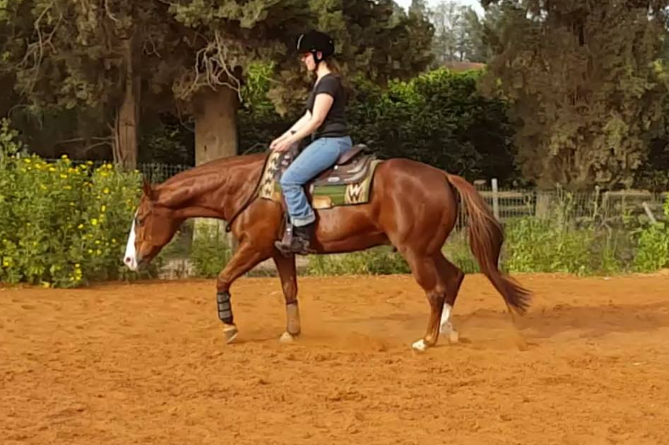 Lesson Bridleless