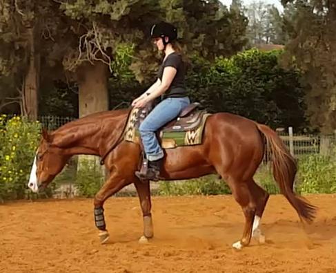 Riding Lessons KPH