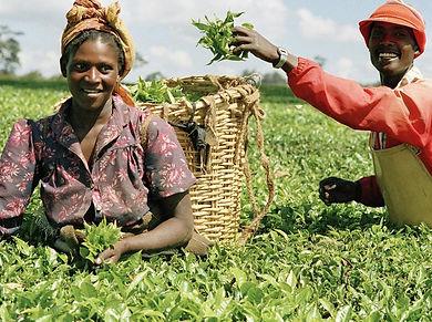 VIZON RESEARCH Agriculture.jpg