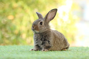 Cute litte rabbit on green grass with na