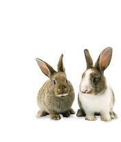 Special_Rabbit_2.jpg