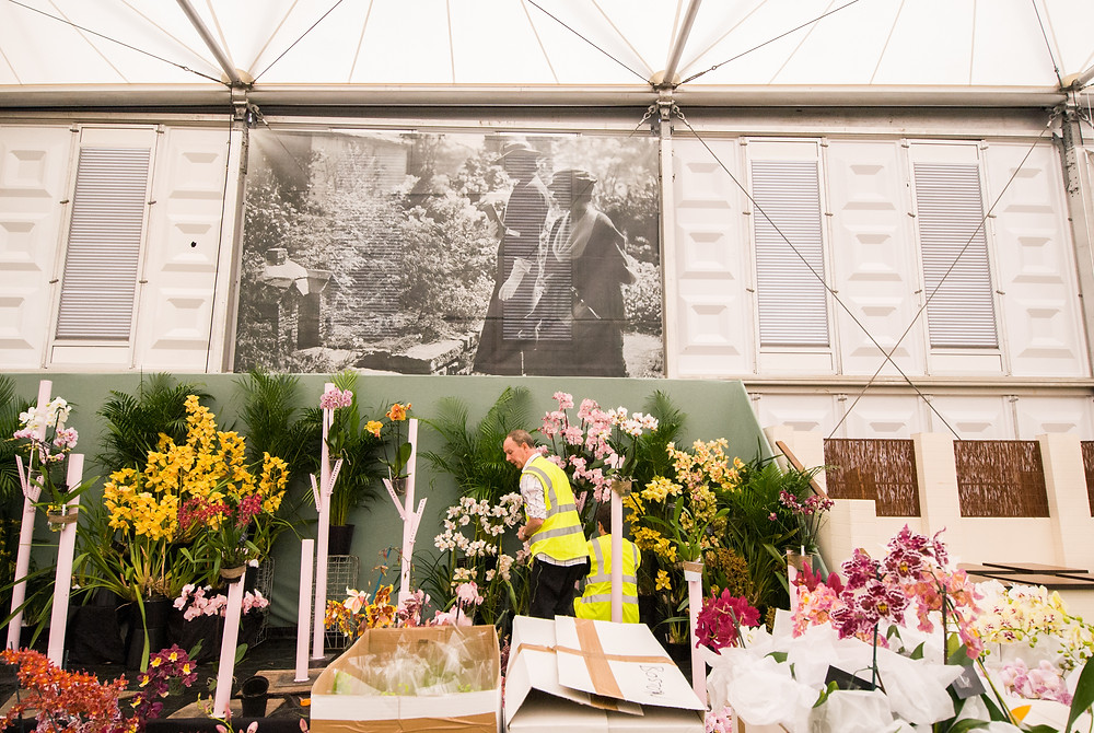 Behind the scenes at Chelsea Flower Show 2016, photo by Georgina Cook