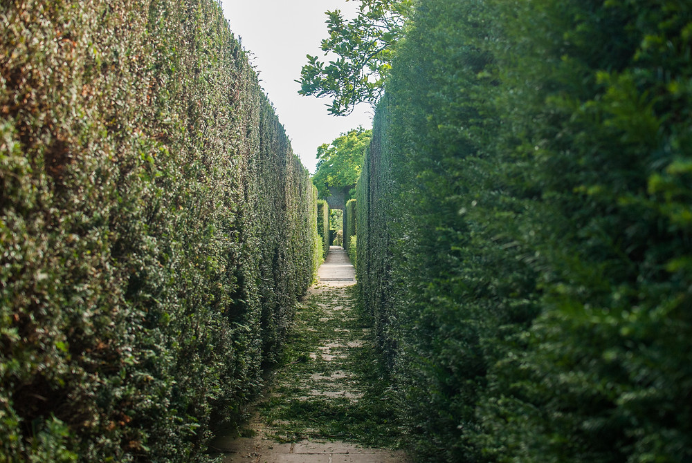 Topiary tunnel at Sissinghurst by Gingko Photography
