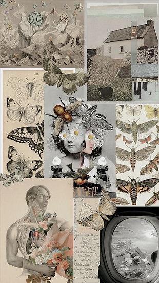 Caixa Arquetípica Arianrhod - Arquétipo do Tempo a seu Favor