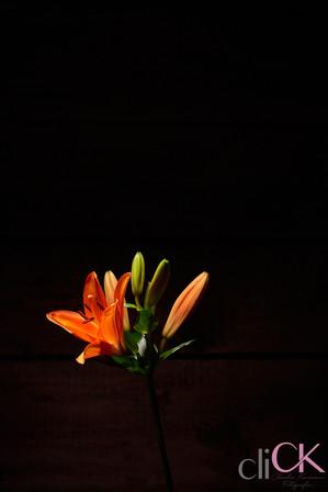 Blumen-Stuhr-Fotoshooting-für-Betrieb-cl