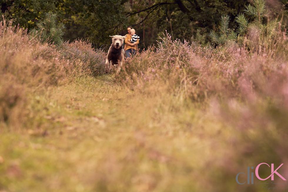 Familienfotos-mit-Hund-Heidefotoshooting