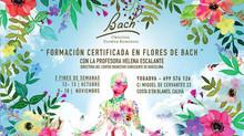 Formación en Flores de Bach