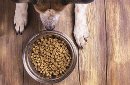 dog-food-e1519928438637-760x506.jpg