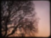 Screen Shot 2019-01-20 at 4.02.03 PM.png