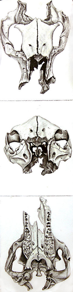 Pencil Drawing Detailed Skulls