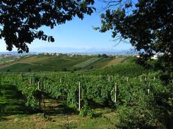 Виноградники в Апулии, гид в Апулии,