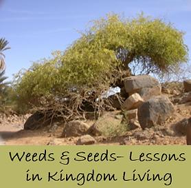 Weeds & Seeds.png