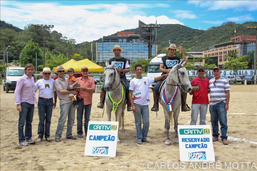 Adestramento de Cavalos