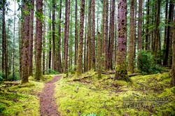 Hobbit Beach/China Creek Loop Trail