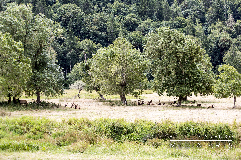 Dean Creek Elk