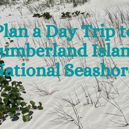 Plan A day trip to Cumberland Island national seashore