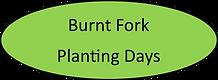 burnt fork planting.png