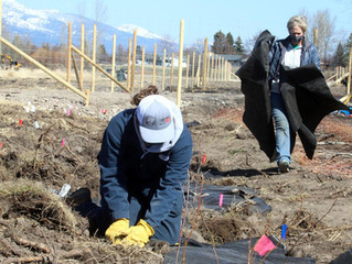 In the News - Roots Against Erosion Project