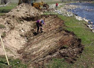 East Fork family restores riverbanks