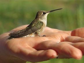hummingbird2.jpeg