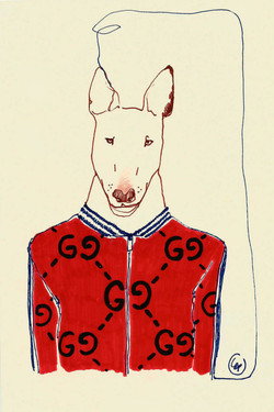 dog in gucci jacket