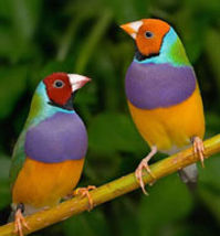 Pet store,pet shop,birds,animals,paraket,finch,bird grooming,wing clipping,pet supplies,lovebirds,