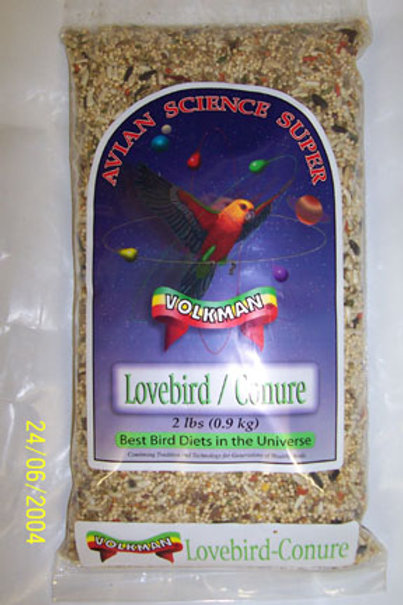 Lovebird - Conure