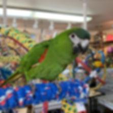 kiwi2.jpg
