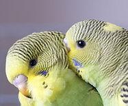Bird Hut exotic birds,Portland bird supplies,grooming hours,clipping hours