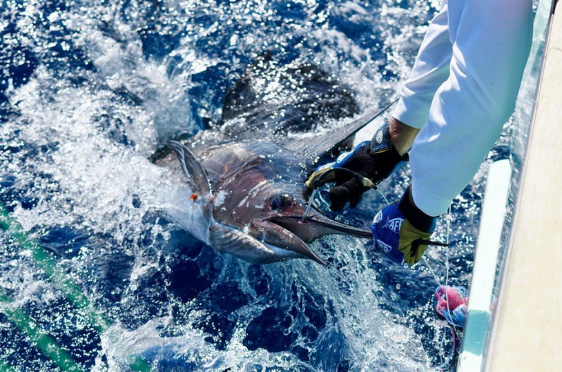 """Billfish Capital of the Bahamas"""