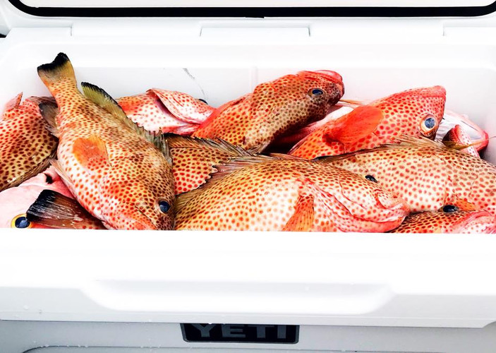 Chub Cay Fishing Report Cover Photo.jpg