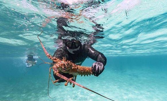 Diving Lobster.JPG