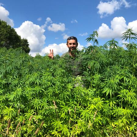 Cannabis - Les Prés Secs, Chermizy-Ailles