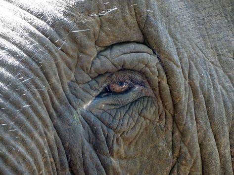 Notre rencontre avec les éléphants