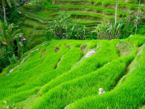 Bali, Terre de toutes les illusions