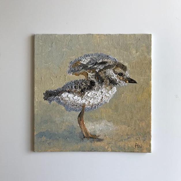 Sandpiper chick. Oil on canvas board 20cm sq